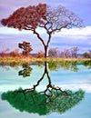 Image : Four seasons tree night surreal