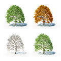 The four seasons tree isolated on white Royalty Free Stock Image