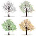 Four seasons trees Stock Photos