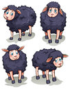 Four sheeps Royalty Free Stock Photo