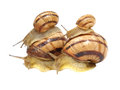 Four snails. Royalty Free Stock Images