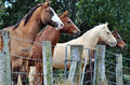 Four stunning different farm horses standing at fence line curiously watching people passing Royalty Free Stock Photo