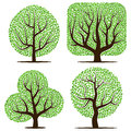 Four trees with green leaves isolated
