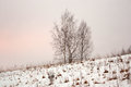 Four trees in snowdrifts on hill Royalty Free Stock Photo