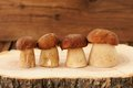 Four wild porcini mushrooms standing in a row on wooden board wi Royalty Free Stock Photo