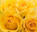 Four yellow roses Royalty Free Stock Images
