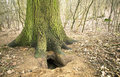 Fox cave under the tree Royalty Free Stock Photo
