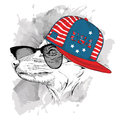 Fox in the glasses, headphones and hip-hop hat with print of USA. Vector illustration.
