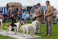 Fox Hounds on show Stock Photo