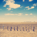 Fox hunt dead foxes hung along a field s fence line in rural australia after a Royalty Free Stock Image