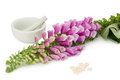 Foxglove with pills common mortar pestle and over white background Royalty Free Stock Photo