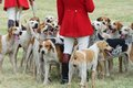 Foxhounds with hunters on foot