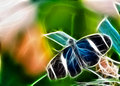 Fractal butterfly Royalty Free Stock Photography