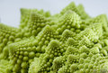 Fractal Vegetable Royalty Free Stock Image