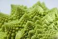 Fractal Vegetable