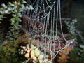 Fragile spider web on a branch in the night Royalty Free Stock Photo