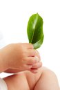 Fragility conceptual image of hands of baby holding fresh green leaves Stock Photography