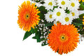 Fragment of bouquet of gerberas Stock Image