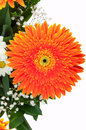 Fragment of bouquet of gerberas orange isolated on a white background Stock Photo