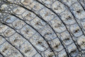 Fragment crocodile skin background Royalty Free Stock Photo