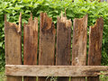 Fragment of fence of rotten boards on the background green plants Royalty Free Stock Image