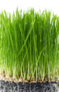 Fragment of fresh green grass Stock Image