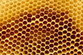 Fragment of honeycomb Stock Image