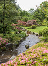 Fragment of a Japanese garden with stream, pink flowers and acer Royalty Free Stock Photo