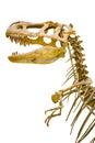 Fragment of the skeleton of Tyrannosaurus rex Royalty Free Stock Photo
