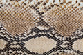 Fragment of of snake skin Royalty Free Stock Photo