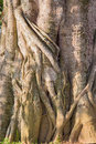 A fragment of a tree trunk vertically Stock Photography