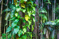 Fragment of a tropical jungle lush in hawaii Stock Image