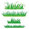 Fragments of green grass. Set of design elements of nature. Vector illustration