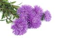 Fragrant bouquet of autumn flowers asters isolated on white Stock Photo