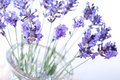 Fragrant bouquet of lavender Royalty Free Stock Image