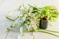 Fragrant oil extracts snowdrop of spring flowers snowdrops on a white background Stock Photos