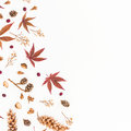 Frame of autumn leaves, dried flowers and pine cones isolated on white background. Flat lay, top view, copy space. Royalty Free Stock Photo