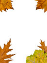 Frame of autumn leaves isolated on white background stock photo Royalty Free Stock Image