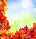 Frame from autumn maple foliage Royalty Free Stock Photo