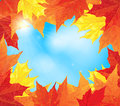 Frame of autumn maple leaves Stock Photos