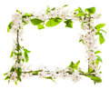 Frame with blossoming cherry branches Royalty Free Stock Photo