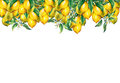 The frame of the branches of fresh citrus fruit lemons with green leaves and flowers.