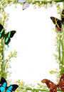 Frame With Butterflies Royalty Free Stock Photos