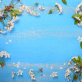 Frame of the cherry blossoms Royalty Free Stock Photo