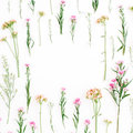 Frame with colorful wildflowers, green leaves, branches on white background Royalty Free Stock Photo
