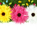 Frame of flowers and Easter eggs Stock Images