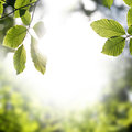 Frame of fresh green spring leaves Royalty Free Stock Photo