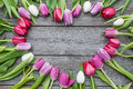 Frame of fresh tulips empty arranged on old wooden background with copy space for your message Stock Photography