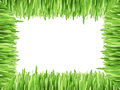 Frame with grass isolated on white background nature Royalty Free Stock Image