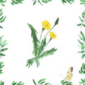 Frame with green foliage and yellow dandelion on a white background. Watercolor seamless pattern